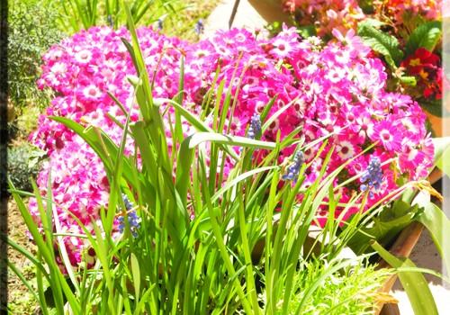 Şile bahçeden