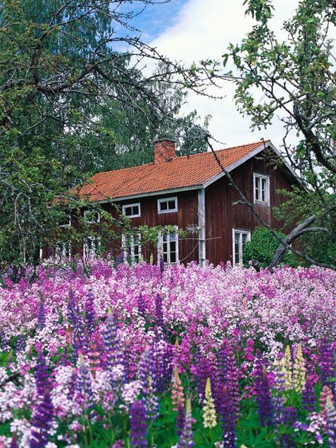 Bağ-Bahçe