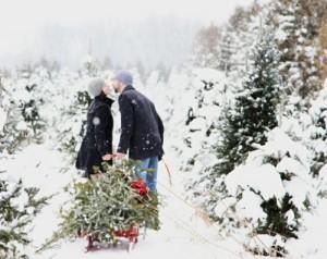 christmastreeonsleigh