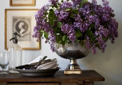 Provence* Dosyası