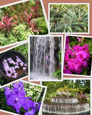 Singapur Botanik Bahçeleri